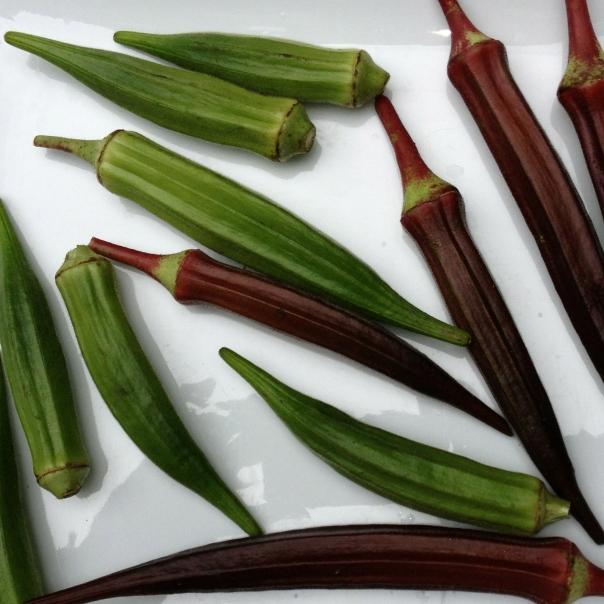 red + green okra whole